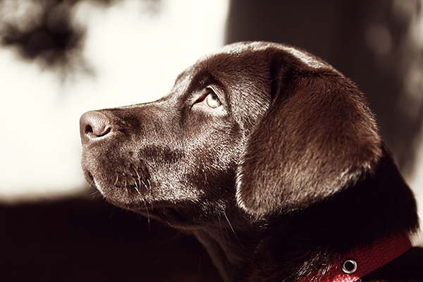 digital marketing consultant pet dog